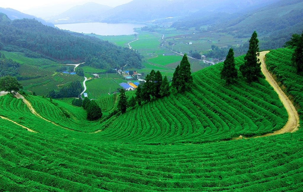 Thekkady and Tea Plantations - 5 Star Resort in Kerala